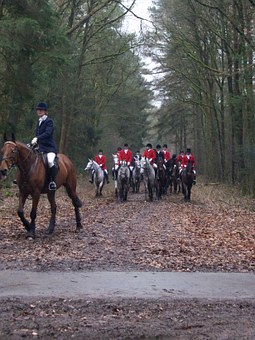 Horses, Hunting, Forest, Autumn, Dogs, Drag