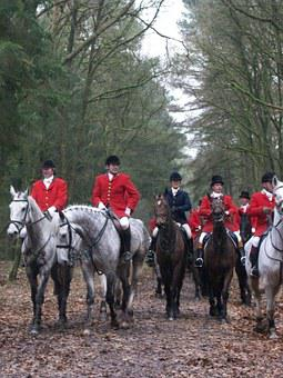 Hunting, Horses, Drag, Autumn, Fox Hunting, Fox, Men