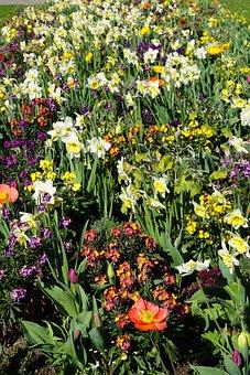 Flower, Spring, Blossom, Bloom, Plant, Nature, Green