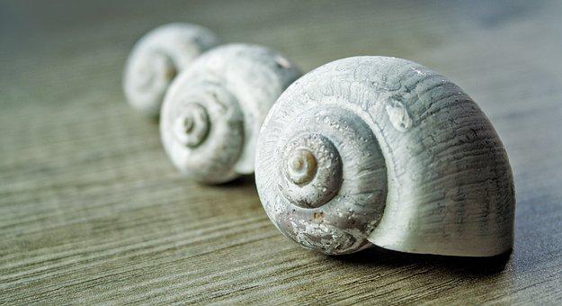Mussels, Sand, Stand, Three, Summer, Sea Macro, Wood