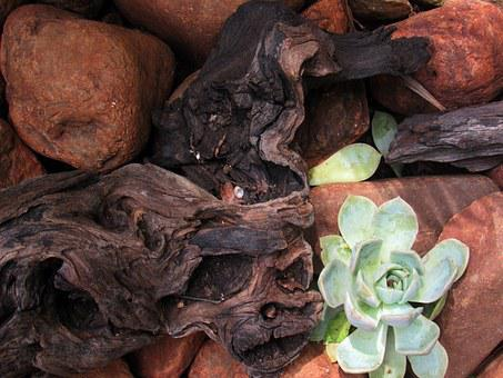 Branch, Rock, Succulent, Plant, Africa, Nature, Green