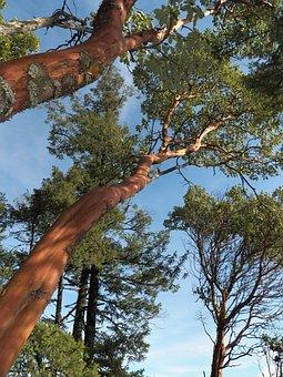 Arbutus, Tree, Botanical, Wood