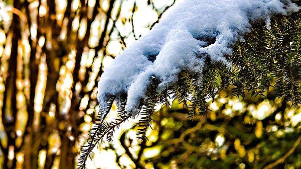 Winter, Fir, Tree, Snow, Wintry, Winter Magic, Cold
