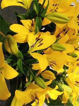 Lilies, Flowers, Bloom, Lily, Stamen