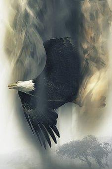 Bald Eagle, Soaring, Bird, Raptor, Flight, Flying, Wild