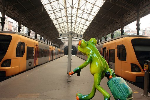 Frog, Farewell, Travel, Funny, Railway Station, Fun