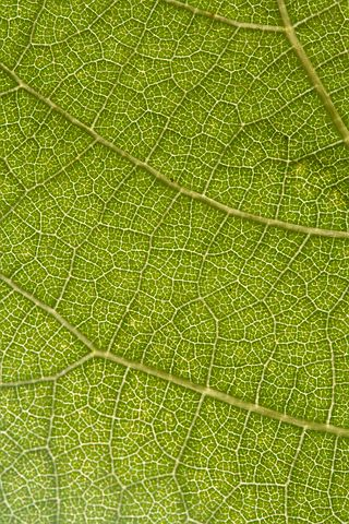 Leaf, Grapes, Nature, Green, Macro, Particular, Screw