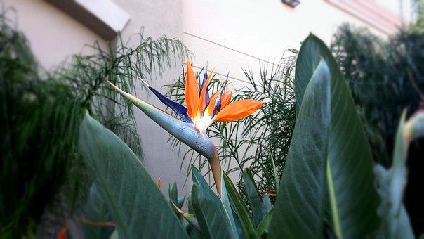 Flower, Plant, Garden, Gardening, Nature, Spring, Green