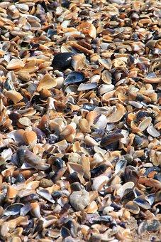Clam, Sea, Shells, Beach, Shell, Shellfish, Seafood