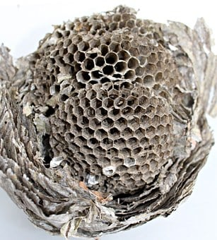 The Hive, Hexagon, Wasps Dwelling, Honeycomb Structure