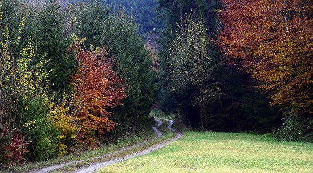 Forest Path, Forest, Trees, Nature, Away, Leaves, Lane