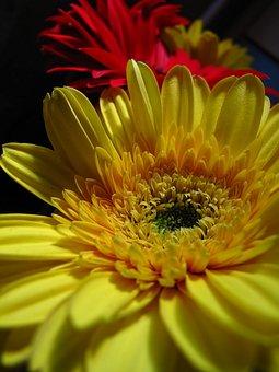 Flower, Yellow, Red, Petals, Yellow Heart