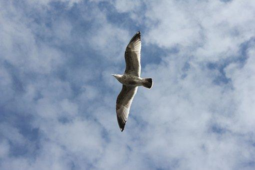 Bird, Flying, Animals, Wings, Sky, Freedom, Wild