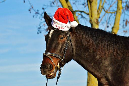 Horse, Christmas, Santa Hat, Funny, Laugh, Animal, Ride