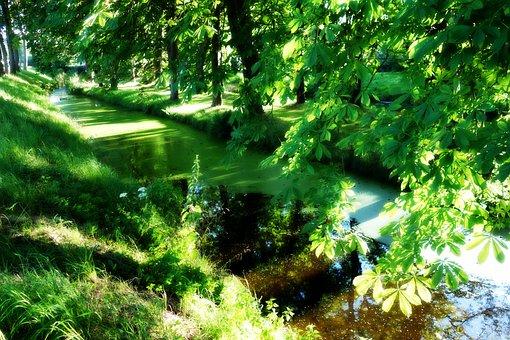 Moat, Water, Duckweed, Landscape, Scenic, Foliage