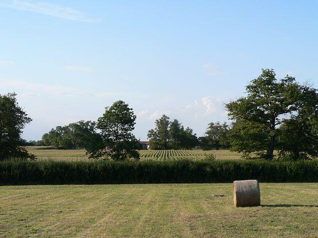 Field, Hay Bales, Bales Of Hay, Agriculture, Nature