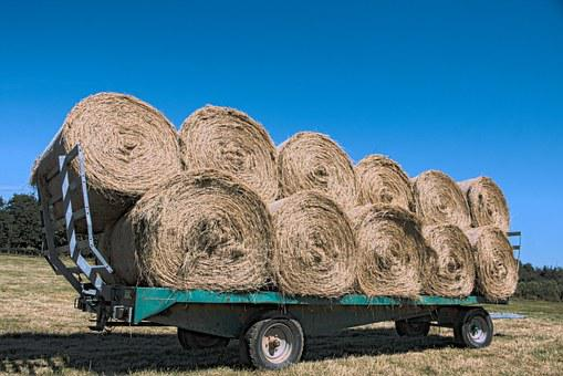 Hay, Trailer, Agricultural Vehicle, Wheat, Field
