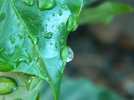 Coffee, Drop, Rain, Agua, Raindrop, Water, Drip, Drops