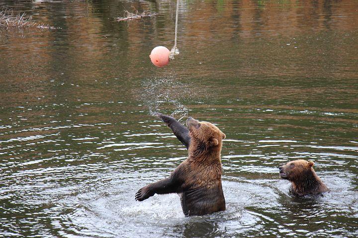 Bear, Slaps, Ball