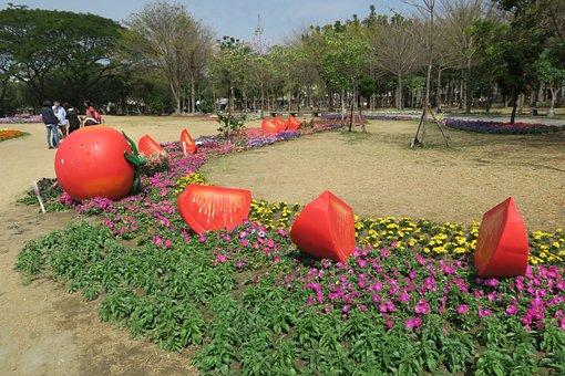 Tainan's Flowers Offering, Tomato, Duckweed Farm Park