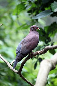 Pigeon, Bird, Fly, Wings, Feather, Wildlife, Beak, Wild