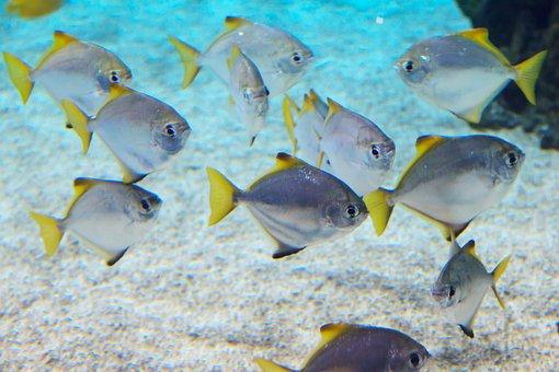 Animal, Animals, Aquarium, Blue, Coral, Deep, Exotic
