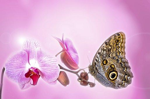 Anniversary, Beautiful, Beauty, Bloom, Blossoms
