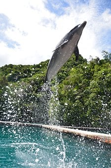 Dolphin, Aquarium, Show, Jump, Leap, Jumping, Leaping