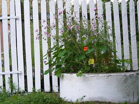 Flowers, Plants, White, Circle, Concrete, The Fence