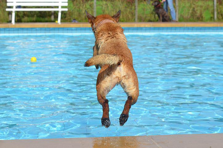 Dog, Outdoor Pool, Dog In The Water, Dog In The Pool