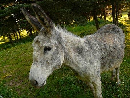Donkey, Domestic Donkey, Curious, Funny