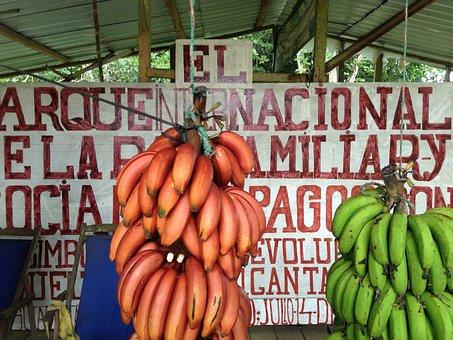 Banana, Galapagos Islands, Fruit, Spanish, Handwritten