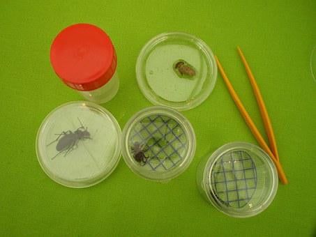 Insects, Experience, Box-magnifying Glass, Mesofauna