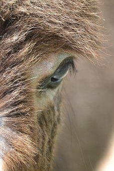 Donkey, Hair, Eye, Animal, Farm, Cute, Mammal, Baby