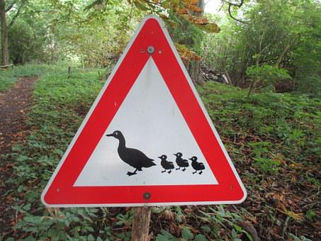 Traffic Sign, Ducks, Nature Conservation, Nature