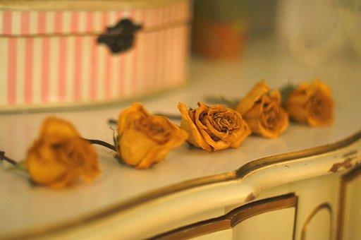 Yelllow, Flower, Kitchen, Yellow, Nature, Summer