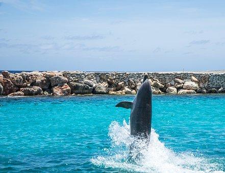 Dolphins, Aquarium, Walking, Fish, Animal, Ocean, Water