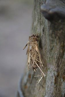 Insect, Grub, Bug, Twigs, Caterpillar, Worm