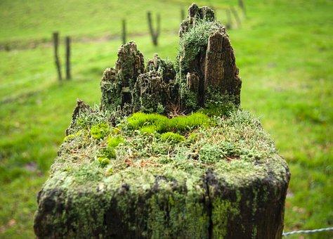 Ecosystem, World, Grove, Green, Prado, Marmstorf