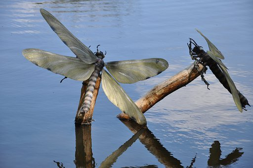 Insects, Lake, Artificial Insects, Dinosaurs