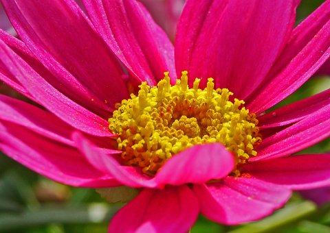 Marguerite, Spring, Blossom, Bloom, Middle, Center