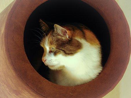 Cat, Animal Portrait, Domestic Cat, Lucky Cat