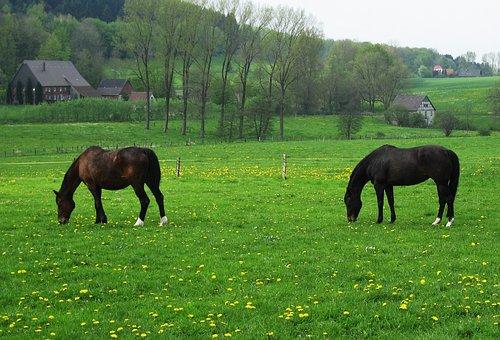 Horse Pasture, Spring Meadow, Horses, Farm, Pasture