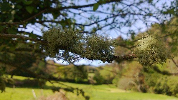 Fungus, Lichen, Tree, Trees, Landscape, Spring, Nature