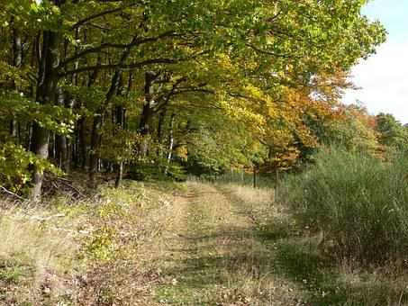 Forest Path, Nature, Green, Away, Trees, Lane