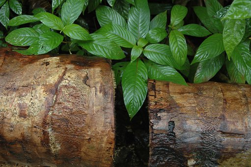 Jungle, Log, Barbados, Tropical, Natural, Outdoor