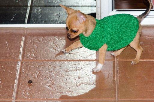 Dog, Puppy, Pet, Animal, Animals, Mammals, Friend, Cute