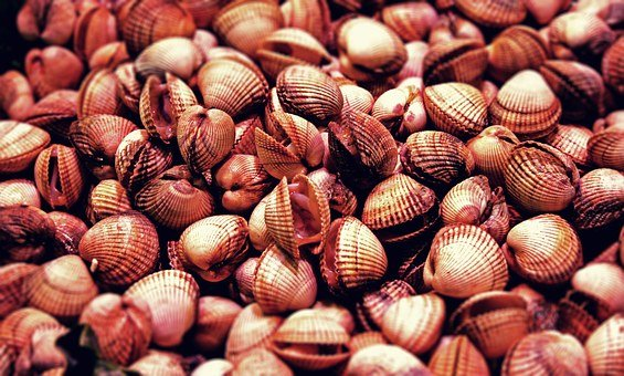 Mussels, Seafood, Eat, Food, Meal, Delicious
