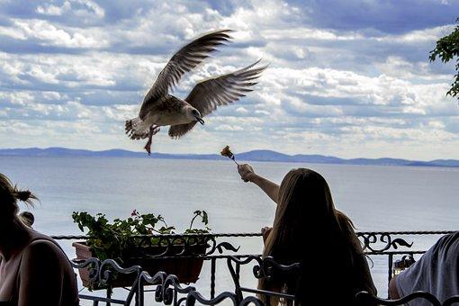 Seagull, Feeding The Birds, Time, Restaurant, Outdoors