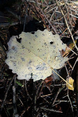 Leaf, Alder, Drop Of Water, Yellow, Hell, Autumn